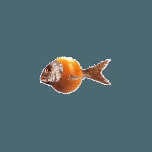 Zwiebelfisch-Verlag-520x520